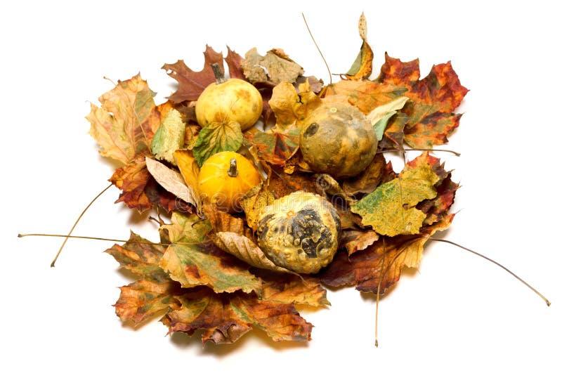 Kleine dekorative Kürbise auf trockenen Herbstblättern stockfotos