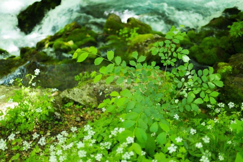 Kleine die bergwaterval op de rotsen met mos diep op de bos Kalmerende aardachtergrond worden behandeld Zachte nadruk stock fotografie
