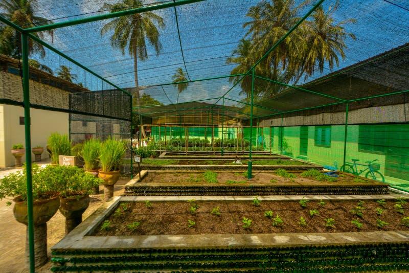 Kleine die kruidtuin bij de tropische toevlucht wordt gevestigd stock afbeelding