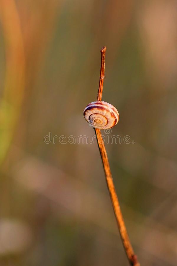 Kleine die naaktslak op gras door zonsondergang wordt verlicht - close-up stock foto