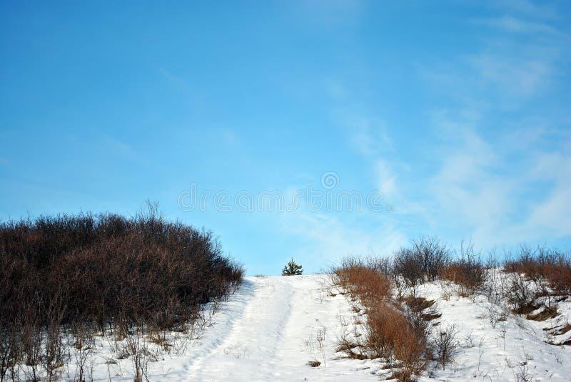 Kleine die pijnboomboom op heuvel, weg met sneeuw, op een achtergrond van blauwe bewolkte hemel wordt behandeld royalty-vrije stock afbeeldingen