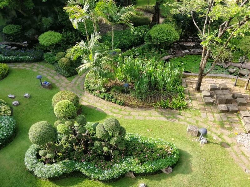Kleine en grote bomen in tuinen, openbare rustende plaatsen, natuurlijke achtergrondafbeeldingen stock afbeelding