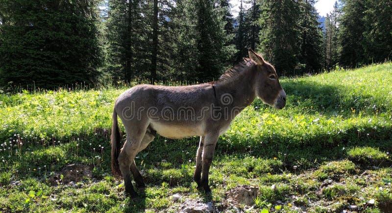 Kleine ezel in aard, die voor me stellen stock afbeeldingen