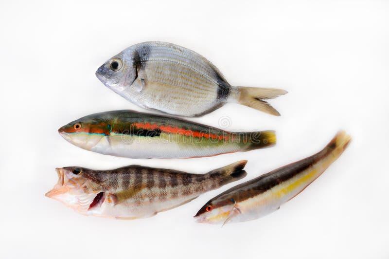 Kleine fische stockfoto bild von nahrungsmittel grob for Kleine fische