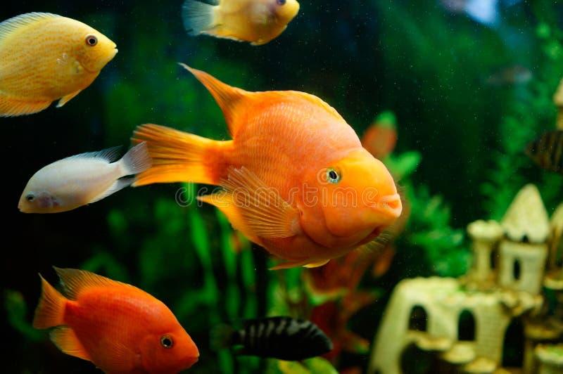 Fische Fische Freundschaft