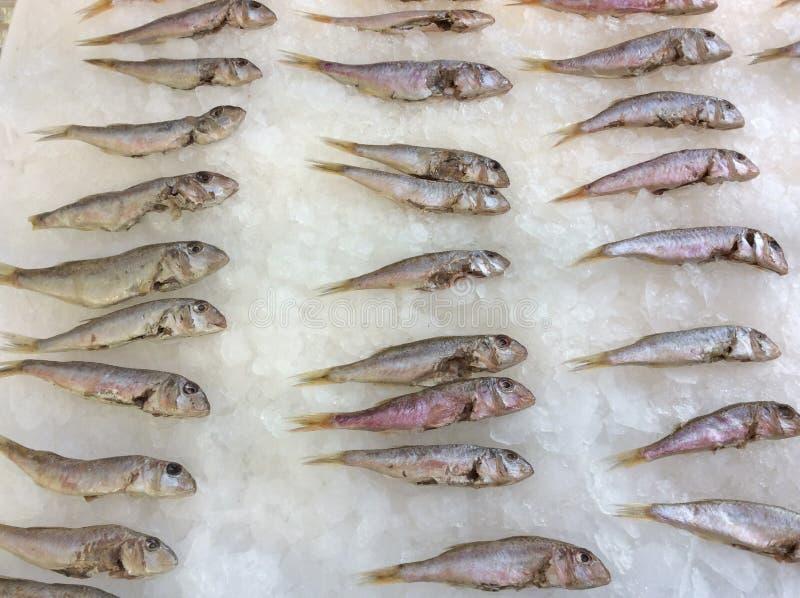 Kleine Fische auf Eis lizenzfreie stockfotos