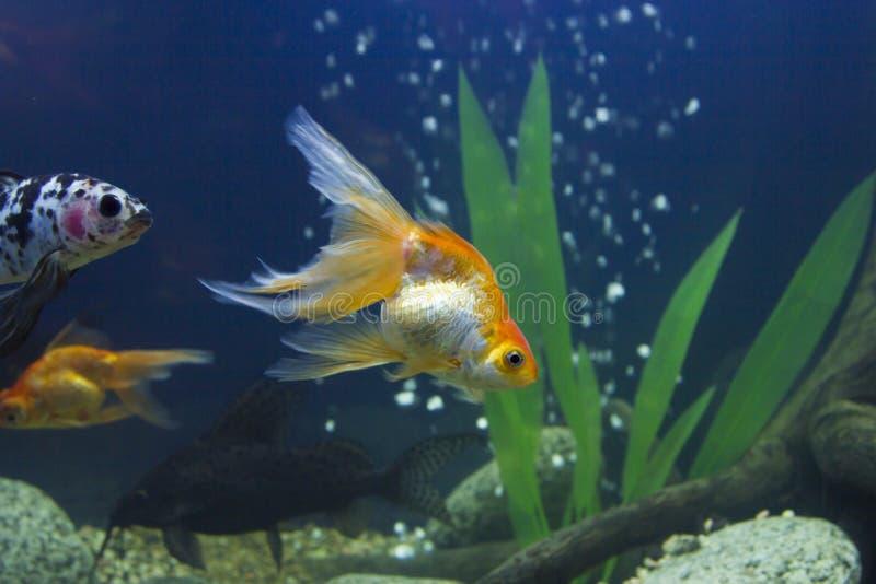 Kleine fische in einem aquarium stockbild bild von reef for Kleine fische
