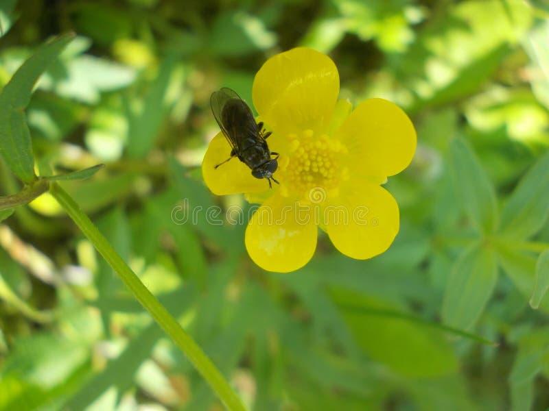 Kleine Fliege sitzt auf Blume lizenzfreies stockfoto