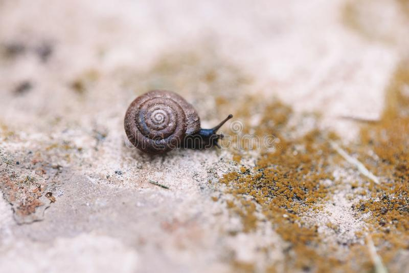 Kleine Gartenschnecke auf dem Boden oder Steinfelsen stockfotografie