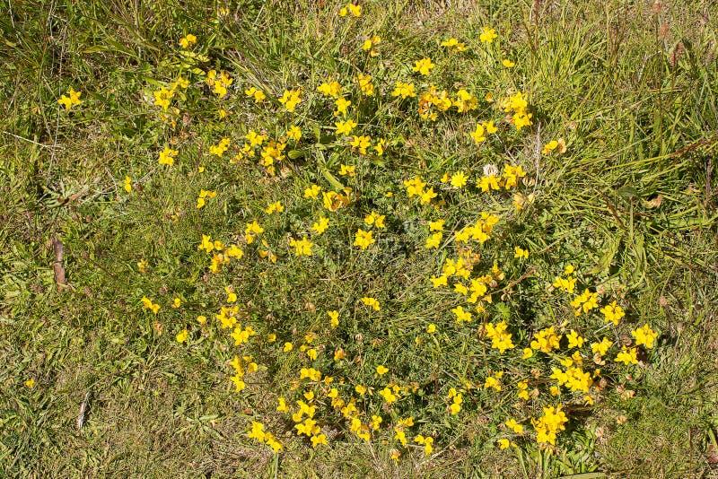 Kleine gelbe Blumen lizenzfreie stockbilder