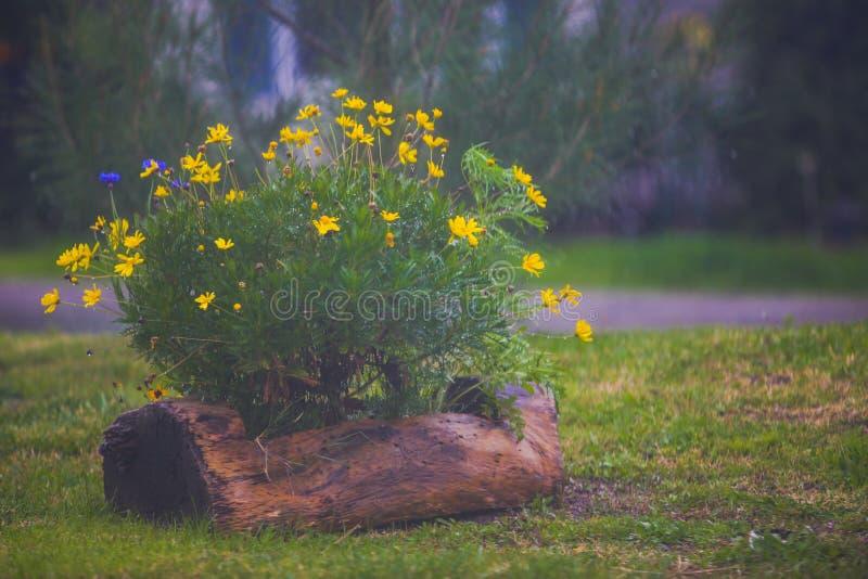 Kleine gelbe Blumen in einem Baumstammpflanzer an einem regnerischen Tag lizenzfreie stockfotos