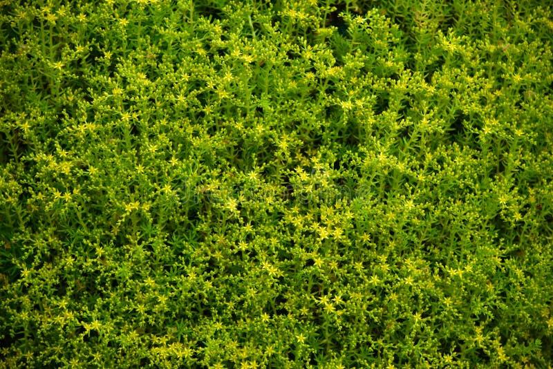 Download Kleine gele bloemen stock foto. Afbeelding bestaande uit aziatisch - 54089230
