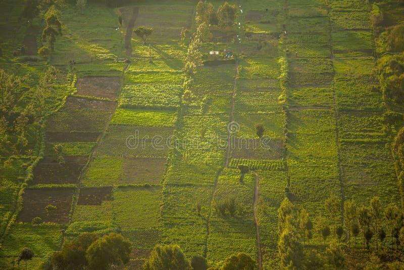 Kleine geregelde gebieden bij zonsondergang, Groot Rift Valley, Kenia royalty-vrije stock foto