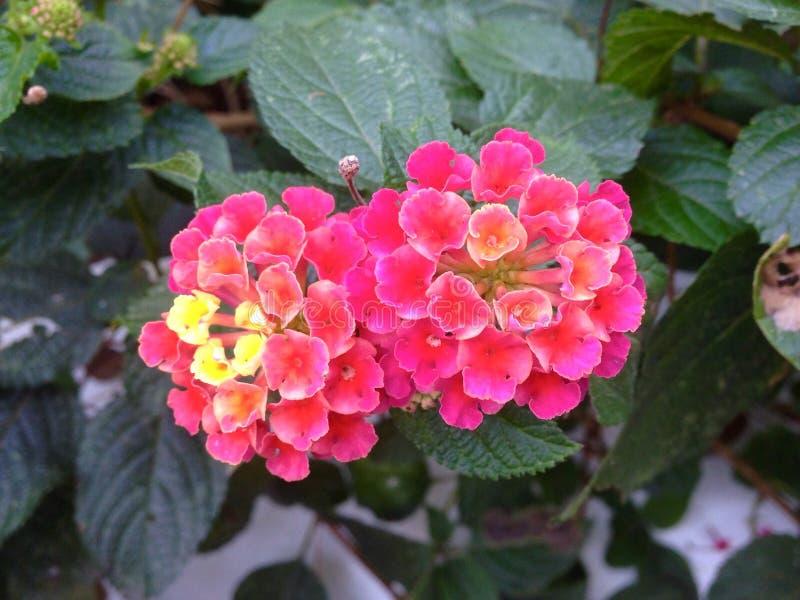 Kleine gevoelige bloemen royalty-vrije stock foto