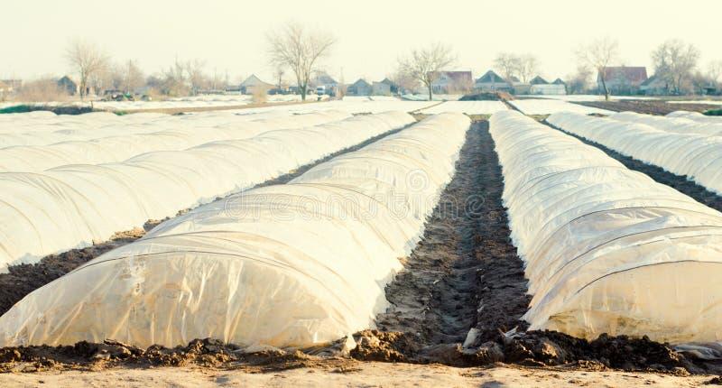 Kleine Gewächshäuser für Gemüse auf dem Gebiet landwirtschaft Agroculture bewirtschaften stockfotografie