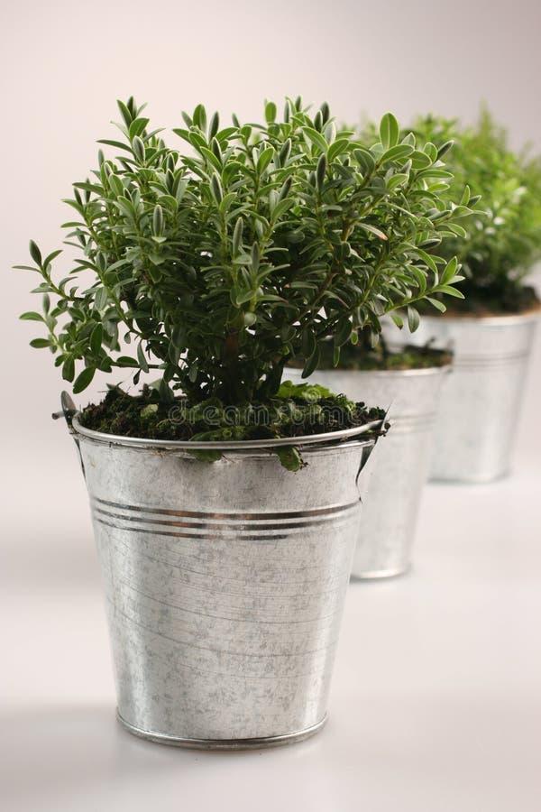 kleine gr npflanzen stockfoto bild von silber dekoration 4880362. Black Bedroom Furniture Sets. Home Design Ideas