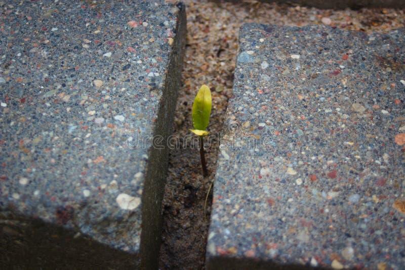 Kleine Gr?npflanze umgeben durch grauen Ziegelstein lizenzfreies stockbild