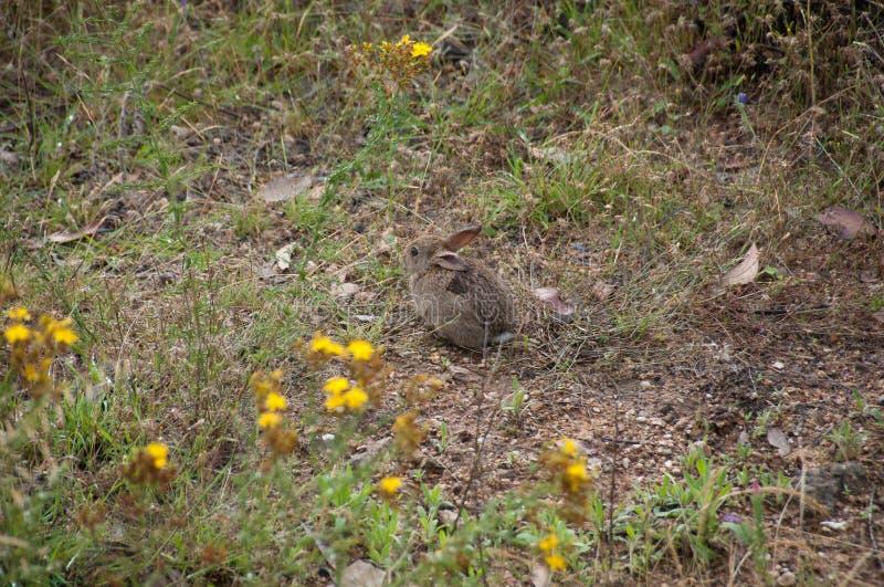 Kleine grijze wilde hazen, konijn in het gras royalty-vrije stock foto's
