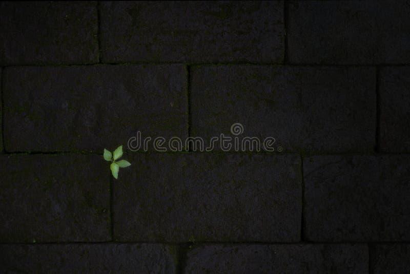 Kleine groene bladeren op donkerrode baksteen royalty-vrije stock foto's