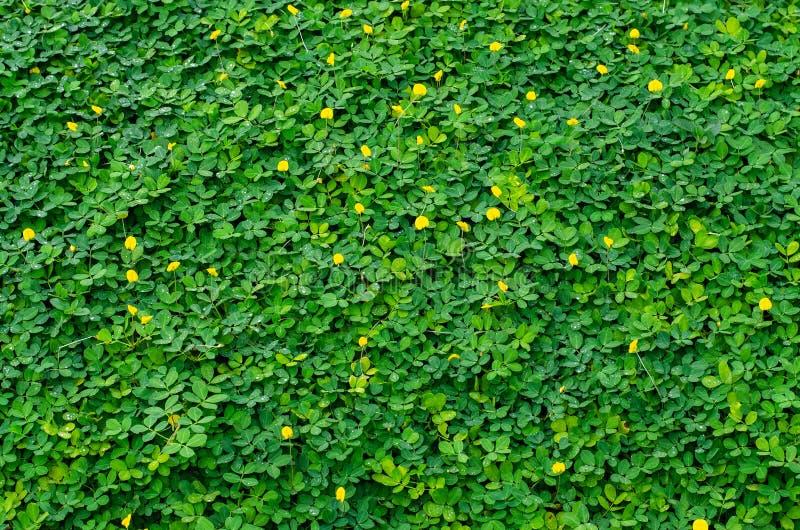 Kleine groene bladereninstallatie en gele bloem, mooie achtergrond royalty-vrije stock fotografie