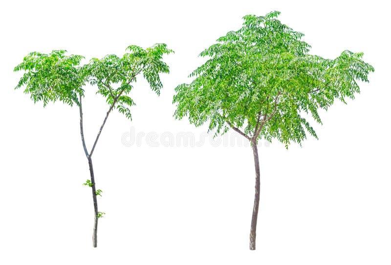 Kleine groene geïsoleerde bomen royalty-vrije stock foto's