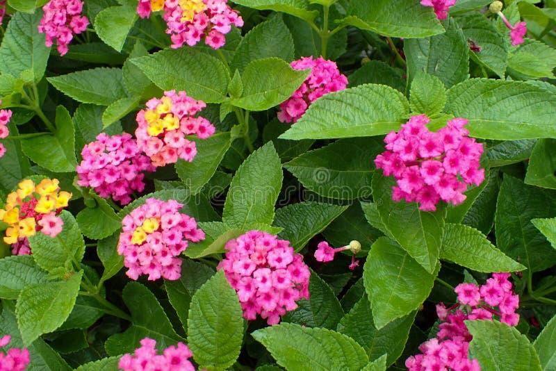Kleine groene installatie met roze bloemen stock foto's