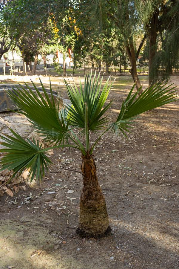 Kleine groene palm royalty-vrije stock afbeeldingen