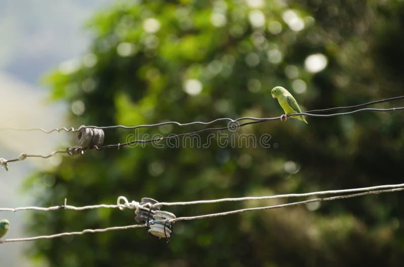 Kleine groene papegaai bij de metaaldraad royalty-vrije stock afbeelding