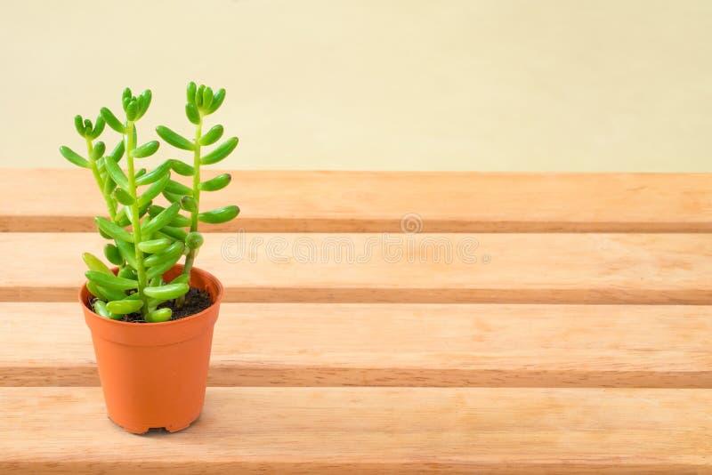 Kleine groene succulente banaan stock afbeeldingen