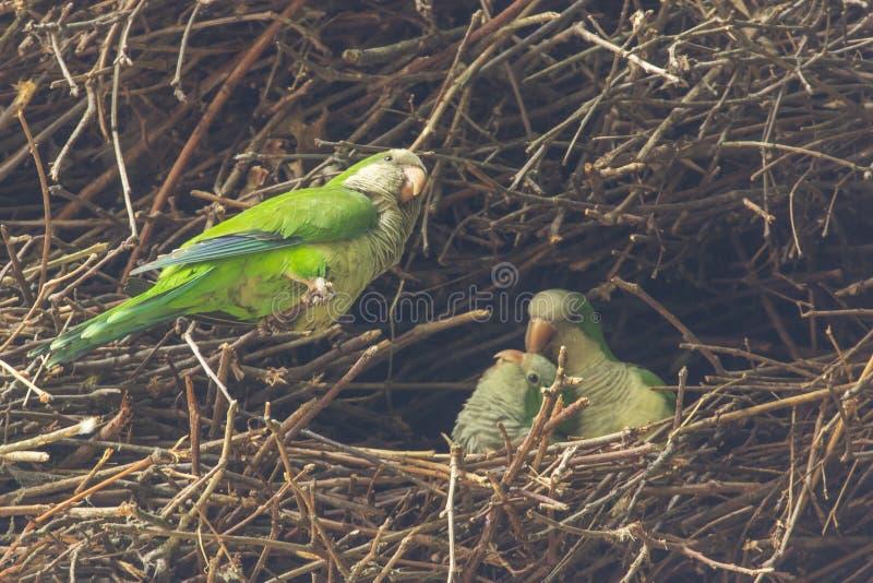 Kleine groep Papegaaien royalty-vrije stock afbeeldingen