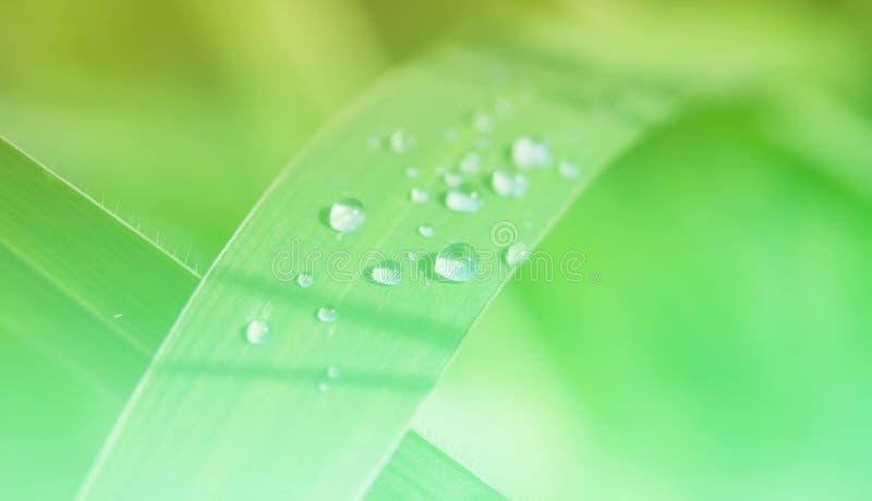 Kleine groep regendruppels op grasinstallaties na een regen royalty-vrije stock foto's