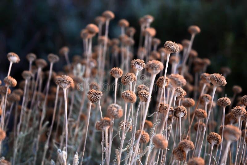 Kleine hübsche Blumen stockfotografie