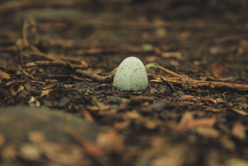 Kleine hübsche defekte VogelEierschale auf Waldboden, Neuseeland lizenzfreies stockfoto