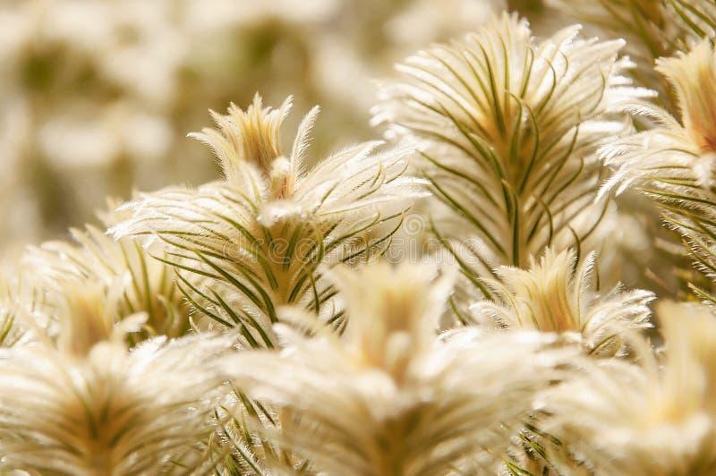 Kleine Haare im Stellenfokus von glühenden goldenen Anlagen stockbilder