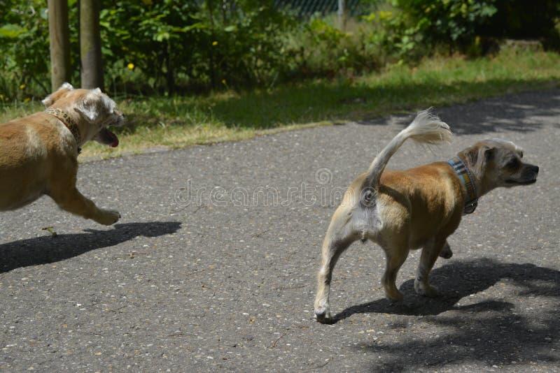 Kleine het lopen hond met aardige coulors royalty-vrije stock afbeelding