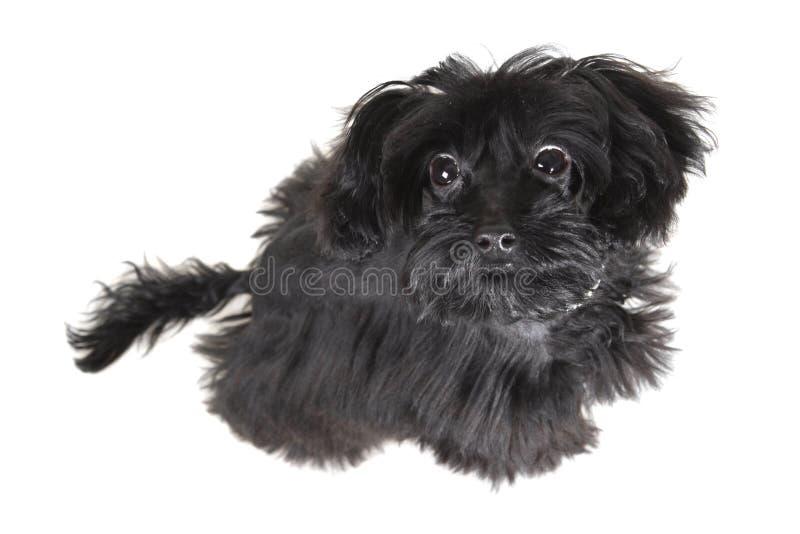Kleine hond stock foto's