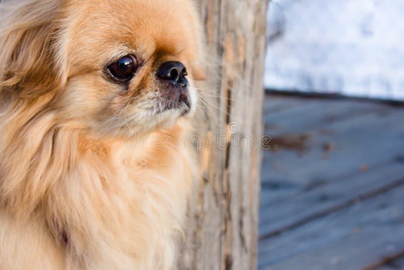 Kleine Hond royalty-vrije stock fotografie