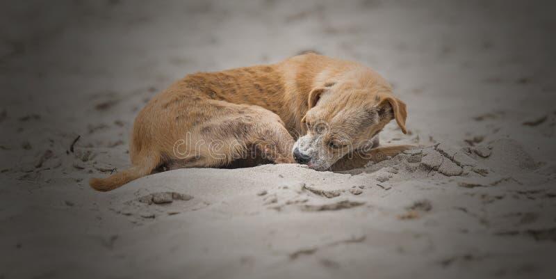 Kleine hond die in het zand liggen royalty-vrije stock foto