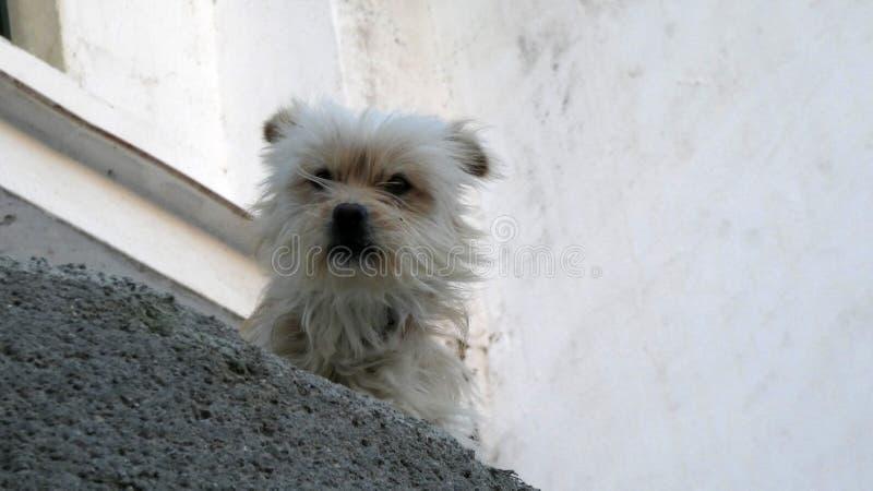 Kleine hond op richel in $ce-andalusisch zonneschijn stock foto