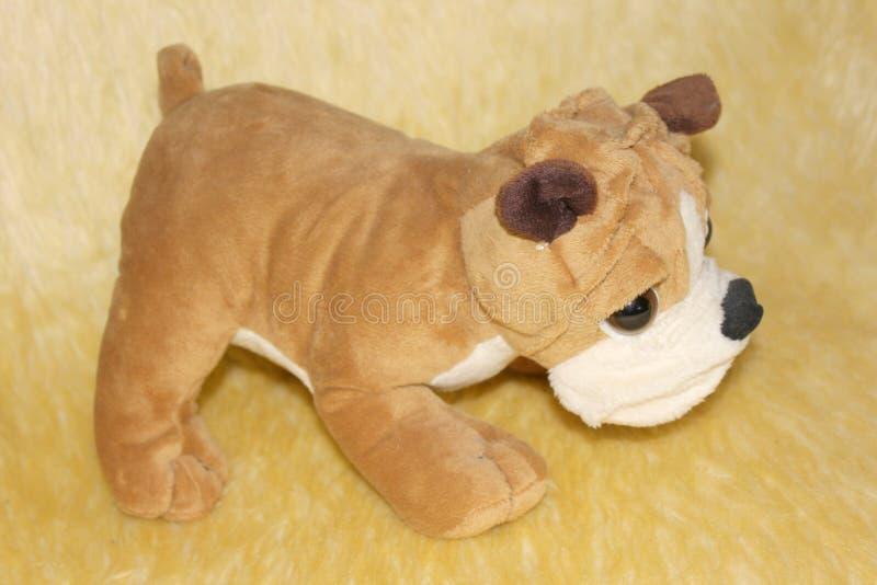 Kleine hond voor uw huis en uw kinderen royalty-vrije stock foto