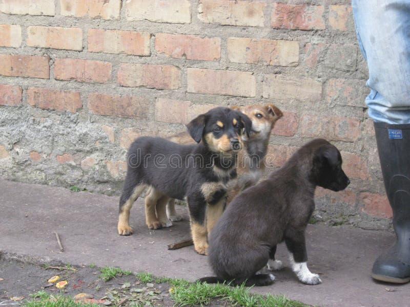 Kleine honden in de aard stock afbeeldingen
