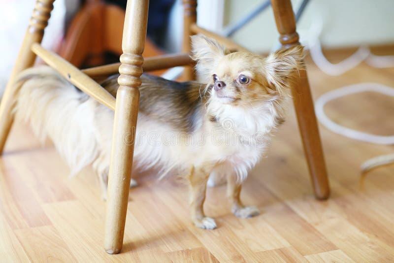 Kleine huisdierenhond royalty-vrije stock foto