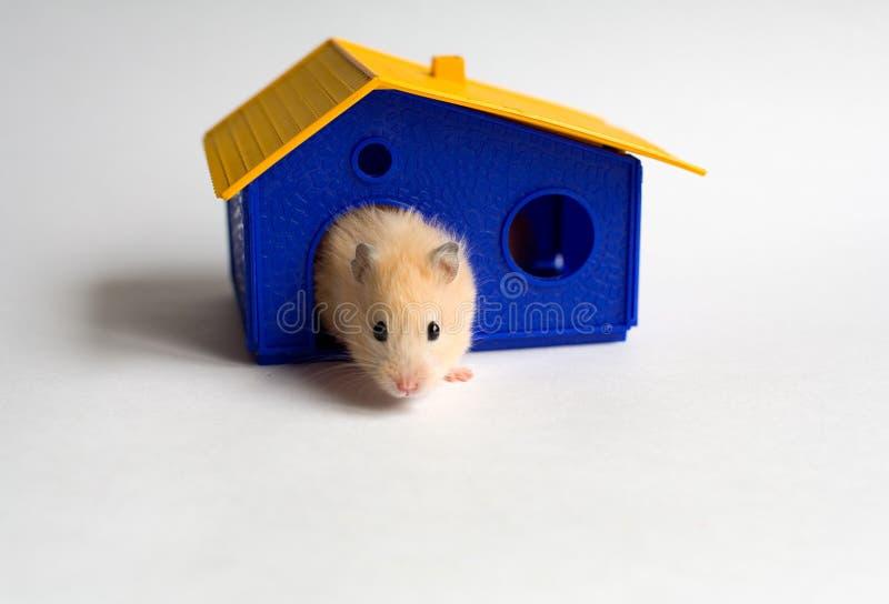 Kleine huiseigenaar stock foto