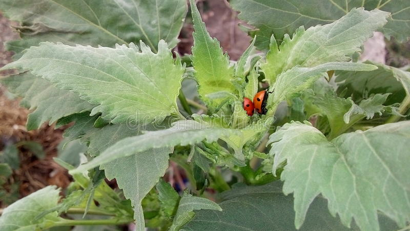 Kleine insecten op het gras royalty-vrije stock afbeeldingen