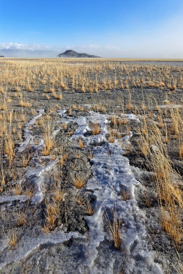 Kleine Insel auf Kluane See, Nationalpark Kluane lizenzfreie stockfotos
