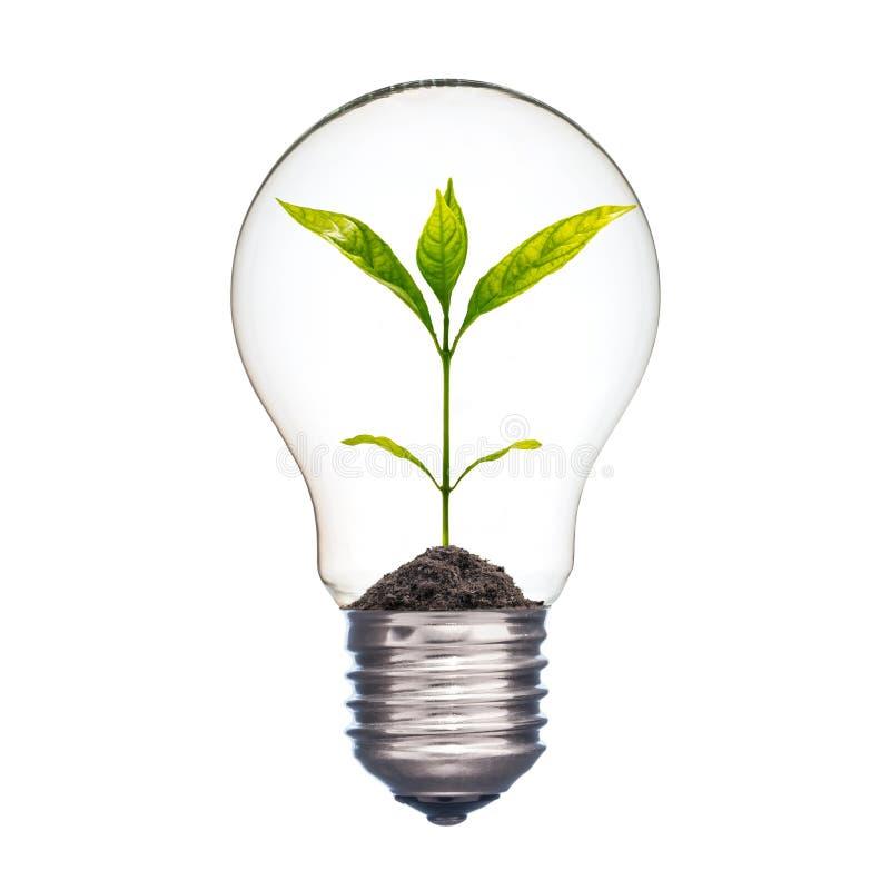 Kleine installatie in een lightbulb royalty-vrije stock afbeelding