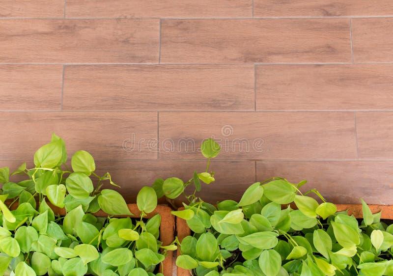 Kleine installatie op ceramische pot op grond voor background1 stock afbeelding