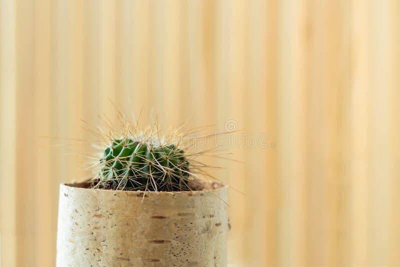 Kleine jongelui in bloempot van birchbark op lichte gestreepte houten achtergrond stock afbeelding