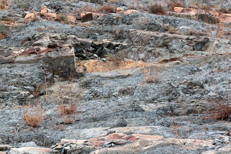Kleine junge Bäume, die in einem Sprung zwischen Schichten rotem und grauem Sandstein auf Felsen wachsen stockfoto