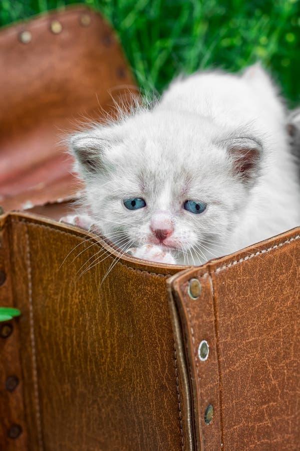 Kleine Kätzchen, die im alten Koffer spielen stockfotografie